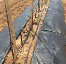 1.2米寬果園防草地布廠家
